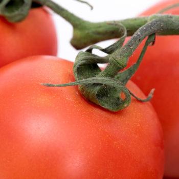 food photography pomodoro